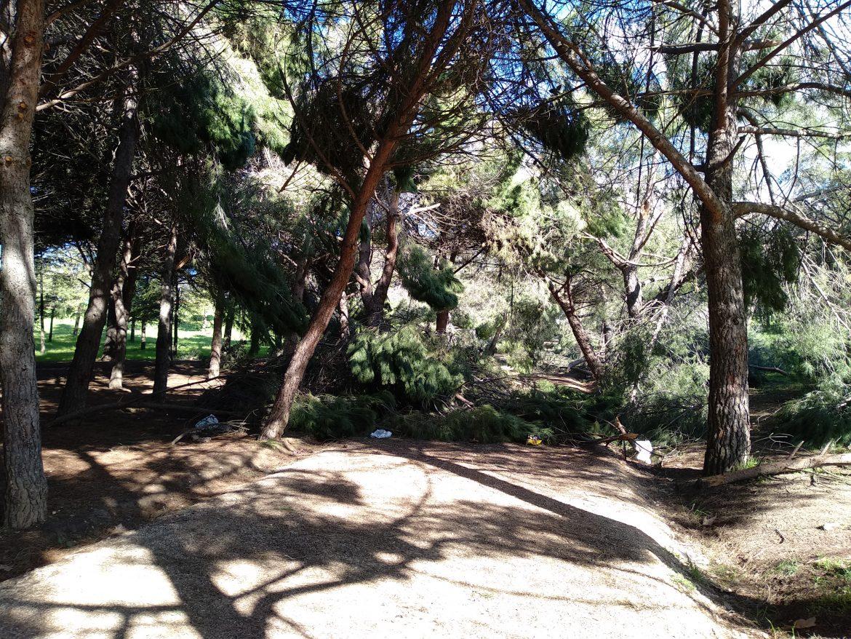 'Mantenimiento' del parque Forestal de Vicálvaro tras Filomena